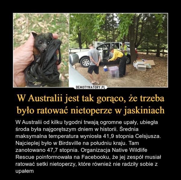 W Australii jest tak gorąco, że trzeba było ratować nietoperze w jaskiniach – W Australii od kilku tygodni trwają ogromne upały, ubiegła środa była najgorętszym dniem w historii. Średnia maksymalna temperatura wyniosła 41,9 stopnia Celsjusza. Najcieplej było w Birdsville na południu kraju. Tam zanotowano 47,7 stopnia. Organizacja Native Wildlife Rescue poinformowała na Facebooku, że jej zespół musiał ratować setki nietoperzy, które również nie radziły sobie z upałem