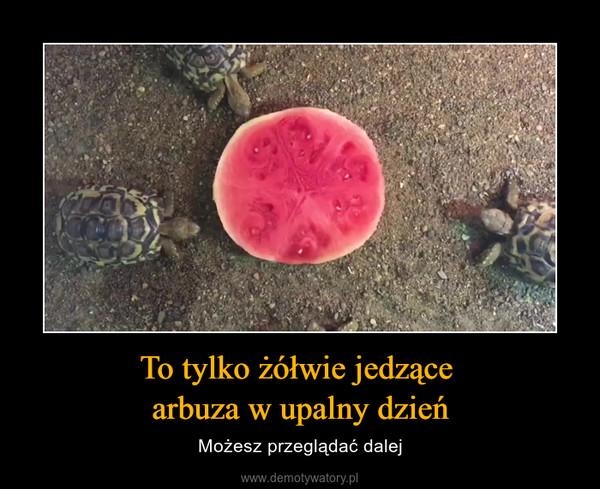 To tylko żółwie jedzące arbuza w upalny dzień – Możesz przeglądać dalej