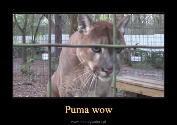 Puma wow –