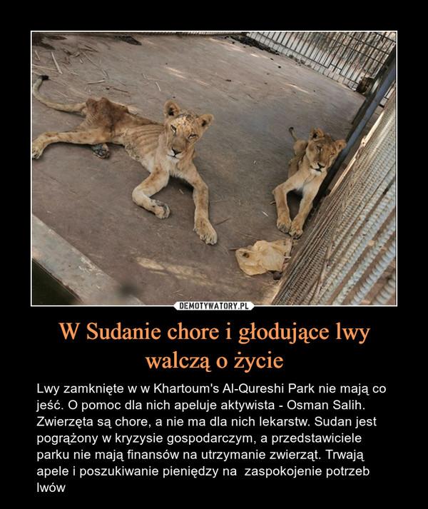W Sudanie chore i głodujące lwywalczą o życie – Lwy zamknięte w w Khartoum's Al-Qureshi Park nie mają co jeść. O pomoc dla nich apeluje aktywista - Osman Salih. Zwierzęta są chore, a nie ma dla nich lekarstw. Sudan jest pogrążony w kryzysie gospodarczym, a przedstawiciele parku nie mają finansów na utrzymanie zwierząt. Trwają apele i poszukiwanie pieniędzy na  zaspokojenie potrzeb lwów
