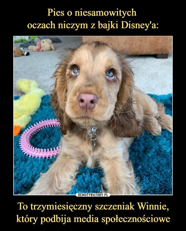 To trzymiesięczny szczeniak Winnie, który podbija media społecznościowe –