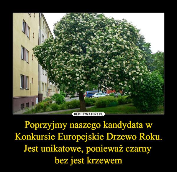 Poprzyjmy naszego kandydata w Konkursie Europejskie Drzewo Roku.Jest unikatowe, ponieważ czarny bez jest krzewem –