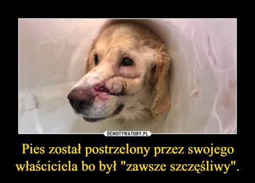 """Pies został postrzelony przez swojego właściciela bo był """"zawsze szczęśliwy""""."""