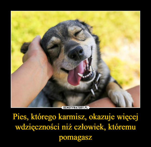 Pies, którego karmisz, okazuje więcej wdzięczności niż człowiek, któremu pomagasz –