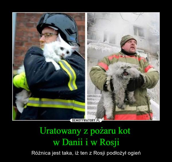 Uratowany z pożaru kot w Danii i w Rosji – Różnica jest taka, iż ten z Rosji podłożył ogień