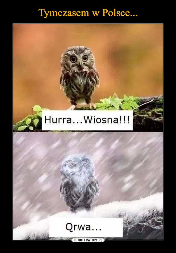 –  Hurra... Wiosna!!!Qrwa...