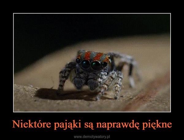 Niektóre pająki są naprawdę piękne –