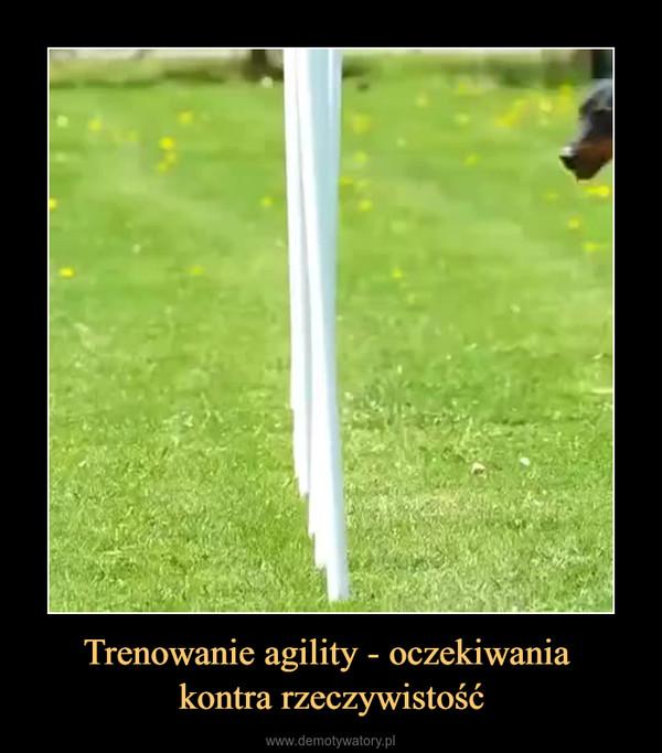 Trenowanie agility - oczekiwania kontra rzeczywistość –