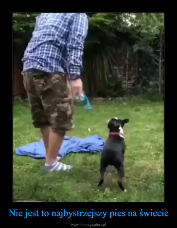 Nie jest to najbystrzejszy pies na świecie –