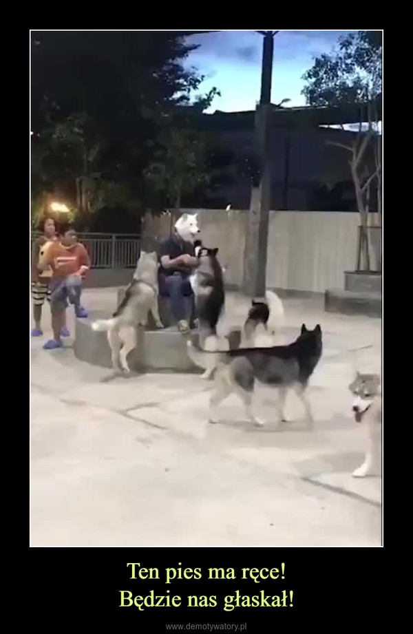 Ten pies ma ręce!Będzie nas głaskał! –