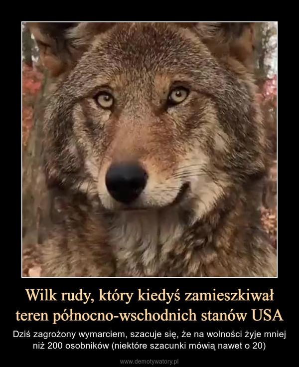 Wilk rudy, który kiedyś zamieszkiwał teren północno-wschodnich stanów USA – Dziś zagrożony wymarciem, szacuje się, że na wolności żyje mniej niż 200 osobników (niektóre szacunki mówią nawet o 20)