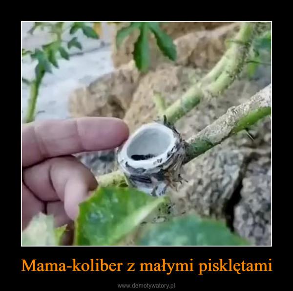 Mama-koliber z małymi pisklętami –