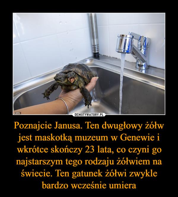 Poznajcie Janusa. Ten dwugłowy żółw jest maskotką muzeum w Genewie i wkrótce skończy 23 lata, co czyni go najstarszym tego rodzaju żółwiem na świecie. Ten gatunek żółwi zwykle bardzo wcześnie umiera –