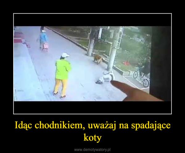Idąc chodnikiem, uważaj na spadające koty –