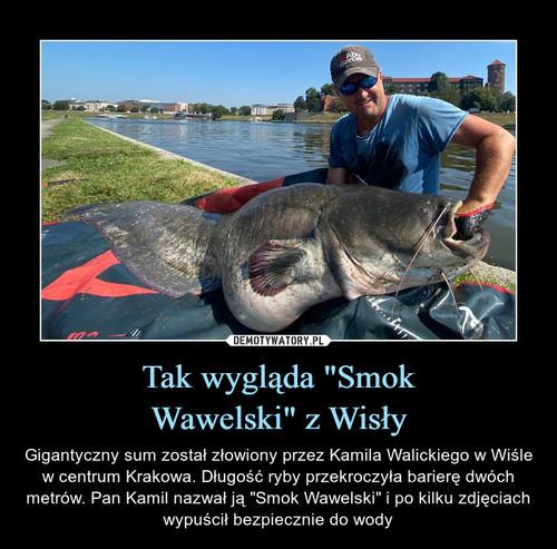 """Tak wygląda """"Smok Wawelski"""" z Wisły"""