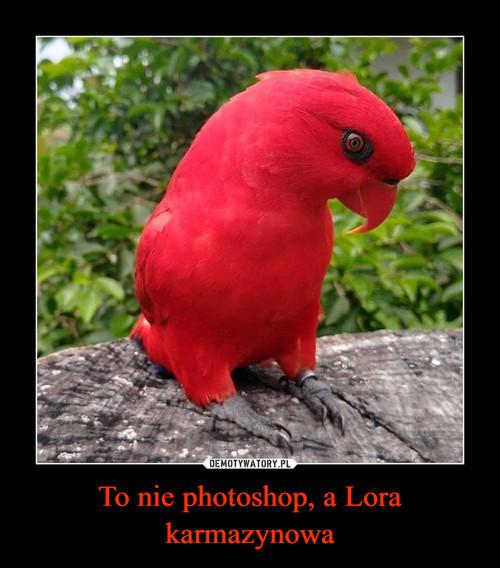 To nie photoshop, a Lora karmazynowa