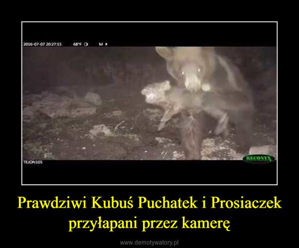 Prawdziwi Kubuś Puchatek i Prosiaczek przyłapani przez kamerę –