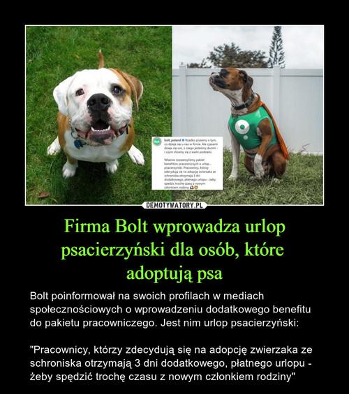Firma Bolt wprowadza urlop psacierzyński dla osób, które  adoptują psa