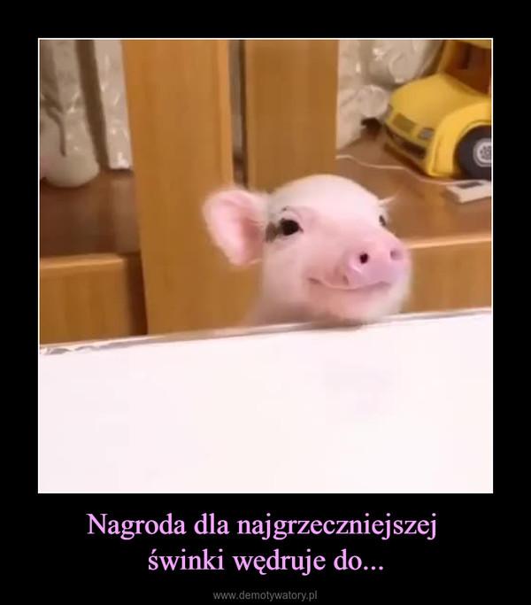 Nagroda dla najgrzeczniejszej świnki wędruje do... –