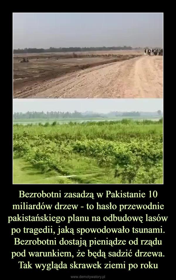 Bezrobotni zasadzą w Pakistanie 10 miliardów drzew - to hasło przewodnie pakistańskiego planu na odbudowę lasów po tragedii, jaką spowodowało tsunami. Bezrobotni dostają pieniądze od rządu pod warunkiem, że będą sadzić drzewa. Tak wygląda skrawek ziemi po roku –