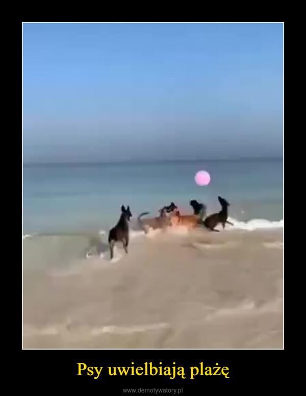 Psy uwielbiają plażę –