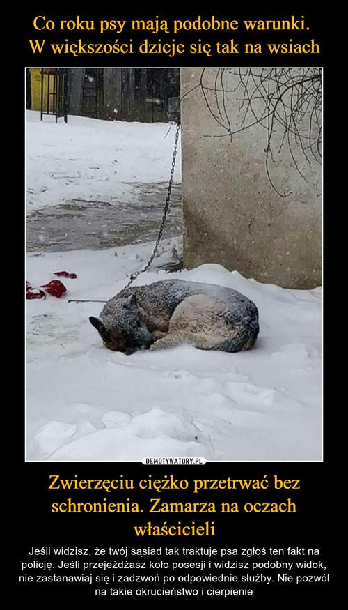 Co roku psy mają podobne warunki.  W większości dzieje się tak na wsiach Zwierzęciu ciężko przetrwać bez schronienia. Zamarza na oczach właścicieli