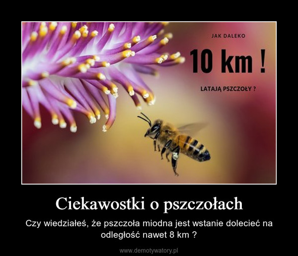 Ciekawostki o pszczołach – Czy wiedziałeś, że pszczoła miodna jest wstanie dolecieć na odległość nawet 8 km ?
