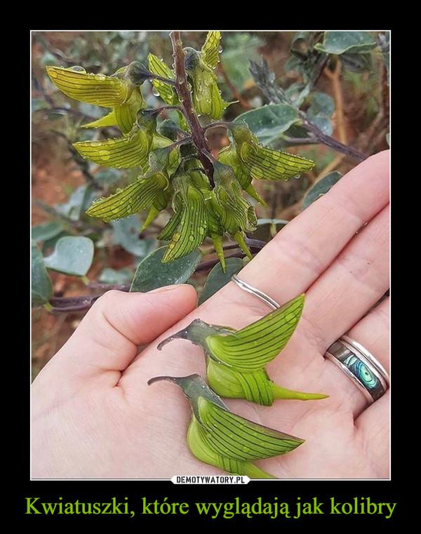 Kwiatuszki, które wyglądają jak kolibry –