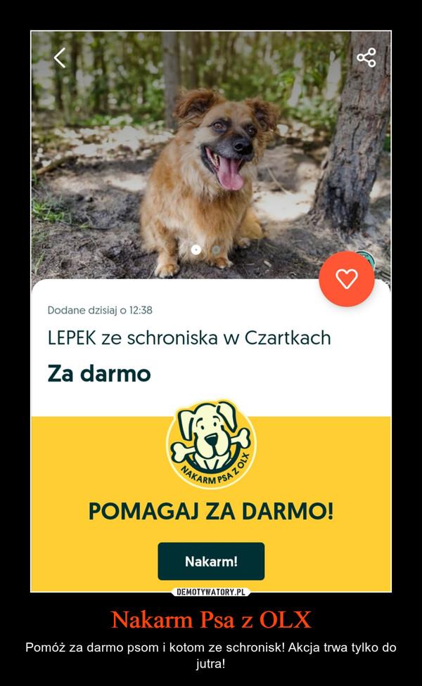 Nakarm Psa z OLX – Pomóż za darmo psom i kotom ze schronisk! Akcja trwa tylko do jutra!