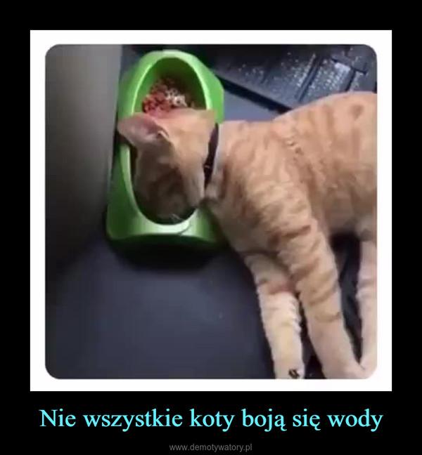 Nie wszystkie koty boją się wody –