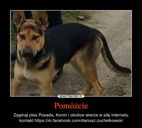 Pomóżcie – Zaginął pies Posada, Konin i okolice wierze w siłę internetu kontakt https://m.facebook.com/dariusz.zuchelkowski