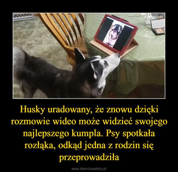 Husky uradowany, że znowu dzięki rozmowie wideo może widzieć swojego najlepszego kumpla. Psy spotkała rozłąka, odkąd jedna z rodzin się przeprowadziła –