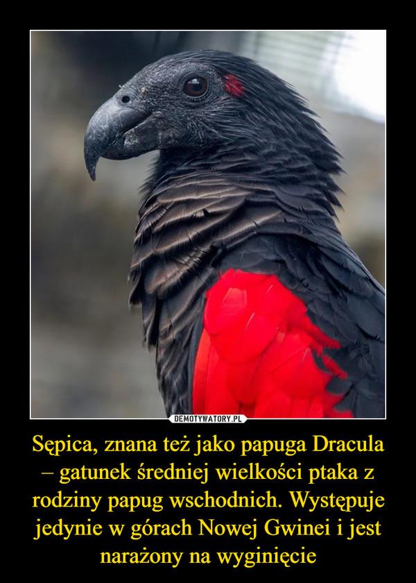 Sępica, znana też jako papuga Dracula– gatunek średniej wielkości ptaka z rodziny papug wschodnich. Występuje jedynie w górach Nowej Gwinei i jest narażony na wyginięcie –