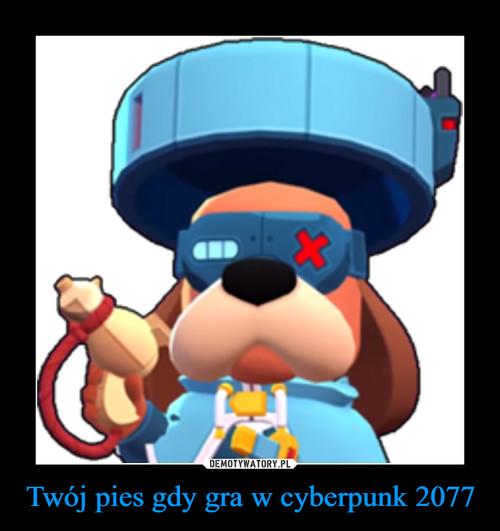Twój pies gdy gra w cyberpunk 2077