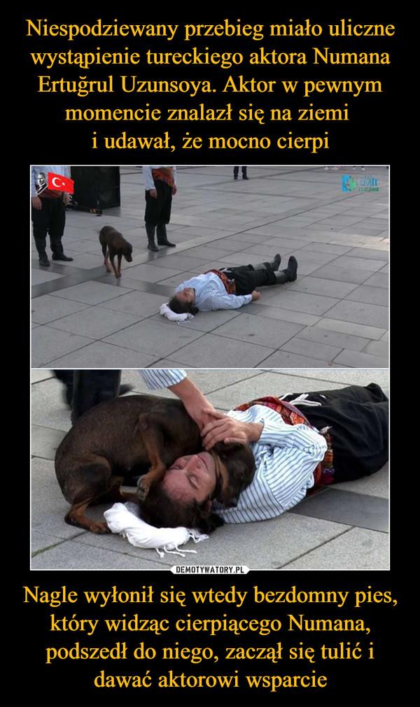 Nagle wyłonił się wtedy bezdomny pies, który widząc cierpiącego Numana, podszedł do niego, zaczął się tulić i dawać aktorowi wsparcie –