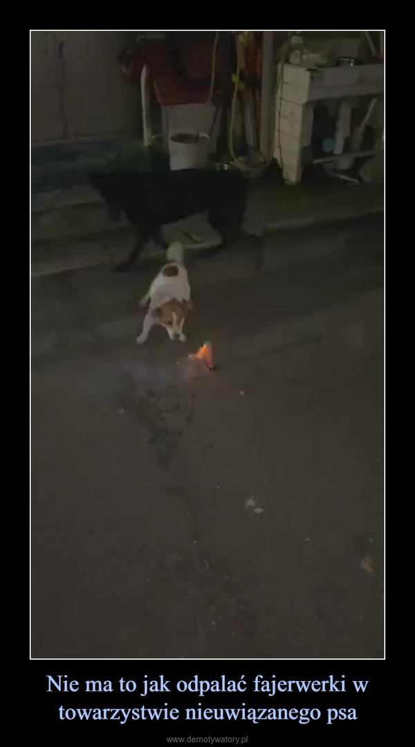 Nie ma to jak odpalać fajerwerki w towarzystwie nieuwiązanego psa –