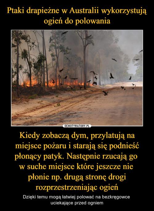 Ptaki drapieżne w Australii wykorzystują ogień do polowania Kiedy zobaczą dym, przylatują na miejsce pożaru i starają się podnieść płonący patyk. Następnie rzucają go  w suche miejsce które jeszcze nie  płonie np. drugą stronę drogi rozprzestrzeniając ogień