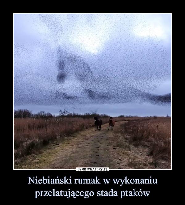 Niebiański rumak w wykonaniu przelatującego stada ptaków –