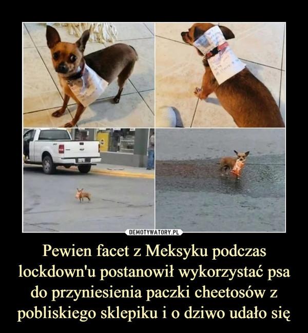 Pewien facet z Meksyku podczas lockdown'u postanowił wykorzystać psa do przyniesienia paczki cheetosów z pobliskiego sklepiku i o dziwo udało się –