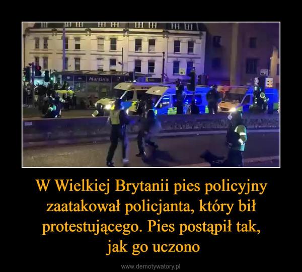 W Wielkiej Brytanii pies policyjny zaatakował policjanta, który bił protestującego. Pies postąpił tak, jak go uczono –