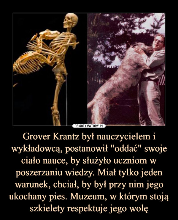 """Grover Krantz był nauczycielem i wykładowcą, postanowił """"oddać"""" swoje ciało nauce, by służyło uczniom w poszerzaniu wiedzy. Miał tylko jeden warunek, chciał, by był przy nim jego ukochany pies. Muzeum, w którym stoją szkielety respektuje jego wolę –"""