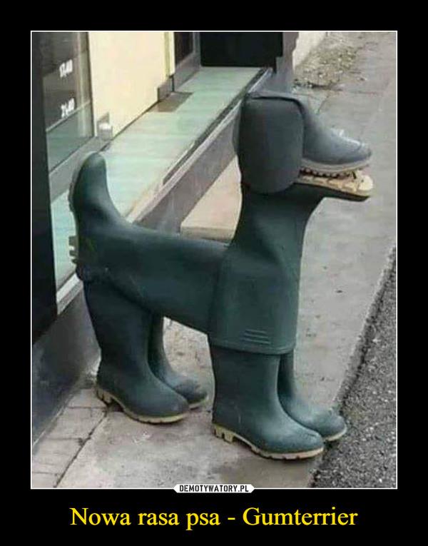 Nowa rasa psa - Gumterrier –
