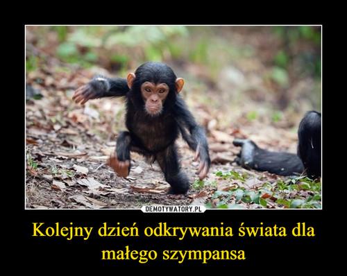 Kolejny dzień odkrywania świata dla małego szympansa