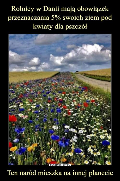 Rolnicy w Danii mają obowiązek przeznaczania 5% swoich ziem pod kwiaty dla pszczół Ten naród mieszka na innej planecie