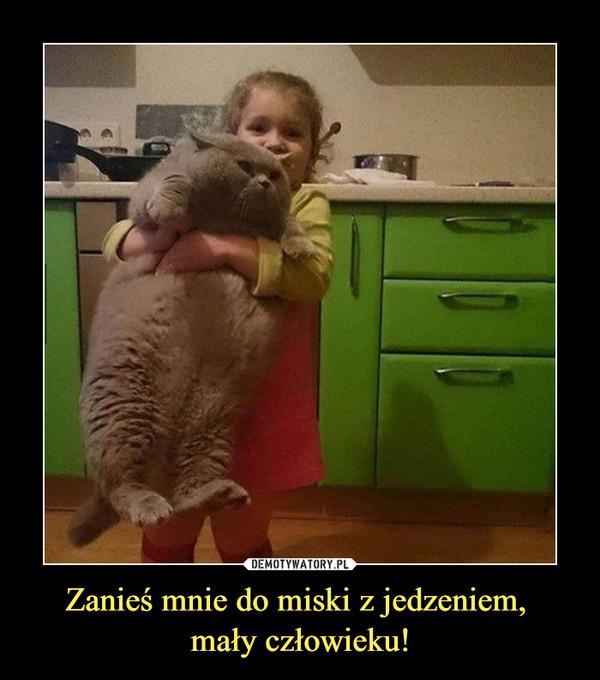 Zanieś mnie do miski z jedzeniem, mały człowieku! –