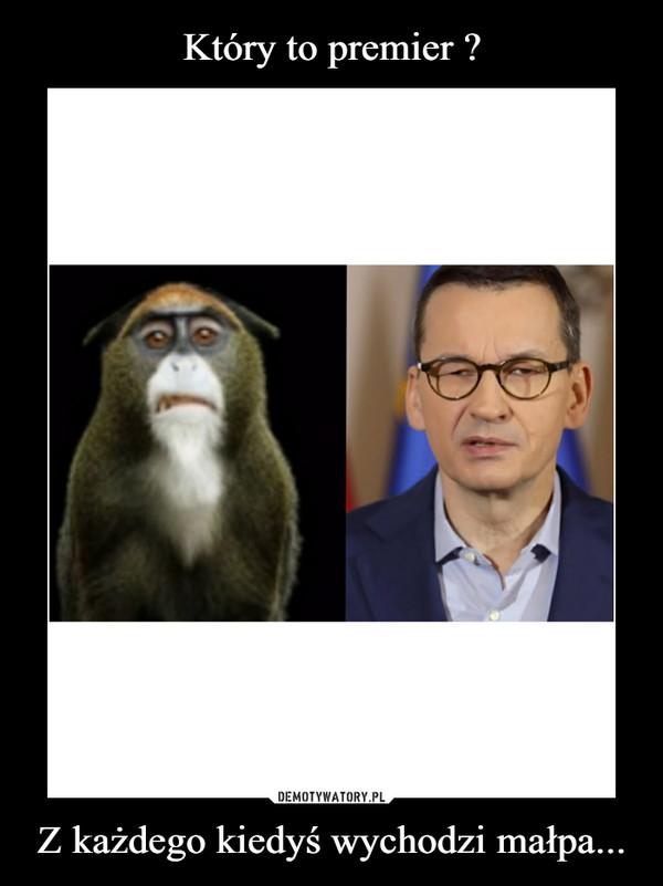 Z każdego kiedyś wychodzi małpa... –