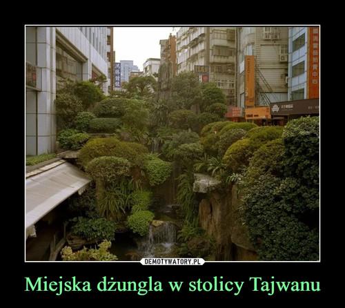 Miejska dżungla w stolicy Tajwanu