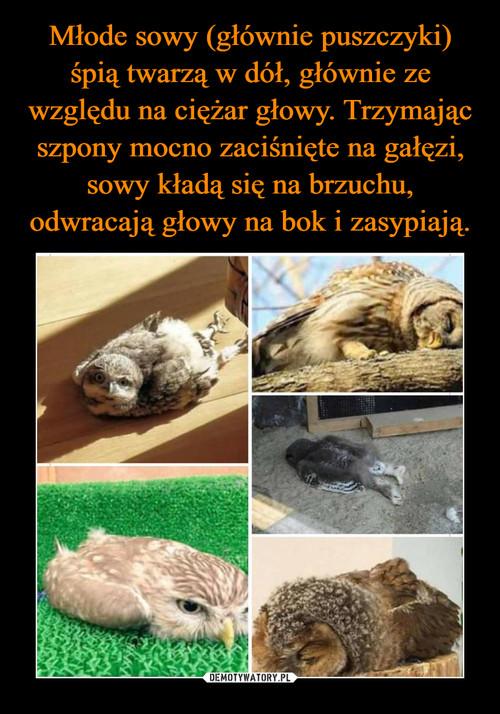 Młode sowy (głównie puszczyki) śpią twarzą w dół, głównie ze względu na ciężar głowy. Trzymając szpony mocno zaciśnięte na gałęzi, sowy kładą się na brzuchu, odwracają głowy na bok i zasypiają.