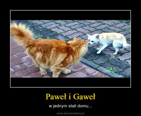 Paweł i Gaweł – w jednym stali domu...