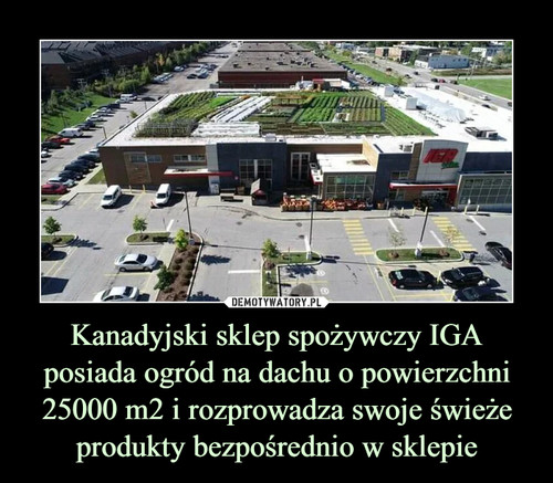 Kanadyjski sklep spożywczy IGA posiada ogród na dachu o powierzchni 25000 m2 i rozprowadza swoje świeże produkty bezpośrednio w sklepie